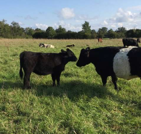 Grass-fed & Naturally-raised Beef